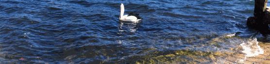 lyne-park-boat-ramp-22